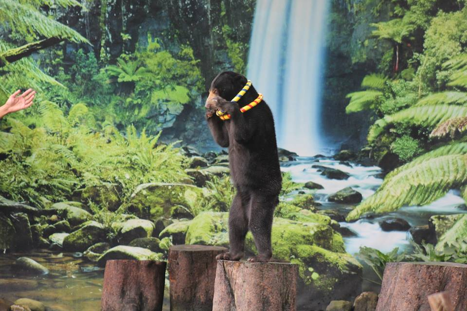 Calls to End Animal Performances at Zoos and Safari Parks (February 21, 2017)