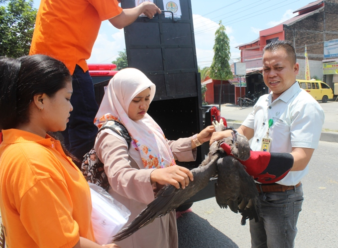 BBKSDA and Scorpion Confiscate One More Eagle in Medan (August 23, 2017)