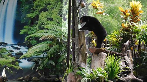Gembiraloka Zoo, Yogyakarta, Discontinues Wildlife Circus (November 26, 2017)