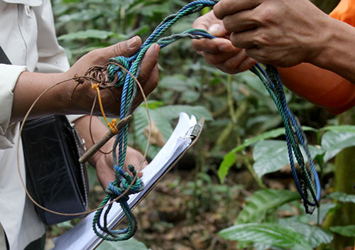 Scorpion and forest rangers patrol Sibolangit forest to prevent wildlife capture (December 12, 2017)