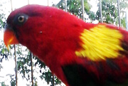 Two New Species of Bird are Discovered in Indonesia (June 2, 2018)