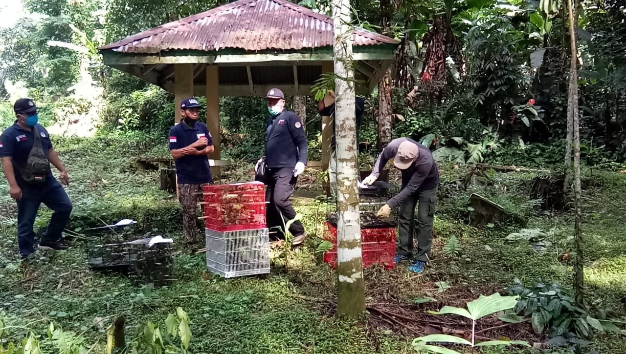 710 release of pleci birds in the Sibolangit Nature Park (May 7, 2020)