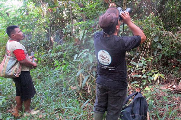 Preventing Tapanuli orangutan capture in Batu Satail Village (June 30, 2020)