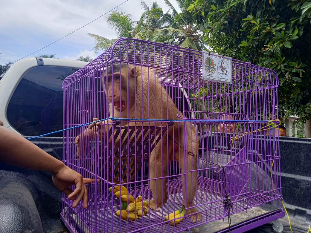 Prevent Cruelty to Animal in Hamparan Perak, North Sumatra (March 9, 2020)