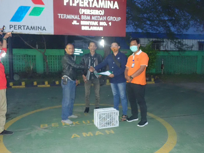 Accipiter virgatus Eagle is Successfully Rescued from PT Pertamina Complex, Medan Belawan (Desember 29, 2020)